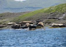 Seal colony Loch Scavaig